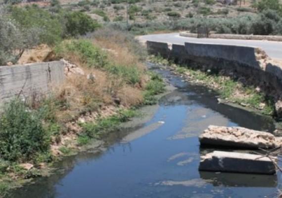 Pencabutan Paksa Pohon Zaitun Untuk Saluran Air Baru Pemukiman Israel
